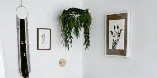 15 gorgeous plants ideas for baby nursery momooze.com