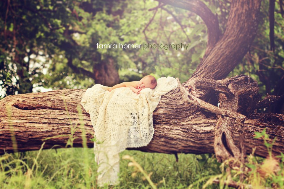 outdoor-newborn-photography-baby-laying-on-a-tree-dallas-texas-photographer