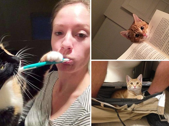 18 Photos that Prove Cats have NO Idea about Personal Space