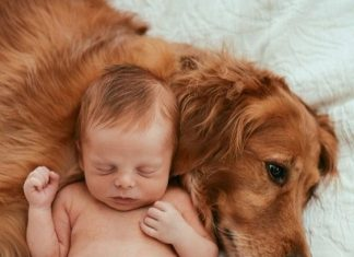 babies and animals