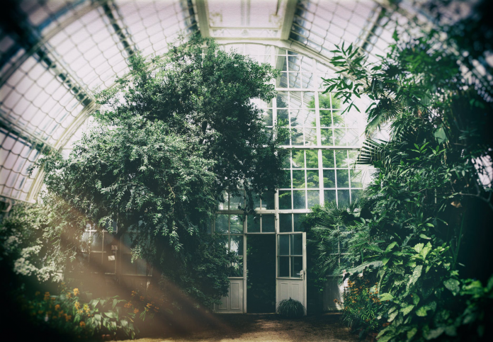 Benefits Of Having A Greenhouse In Your Home