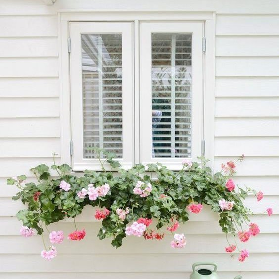 Best Plants For Window Boxes To Create A Stunning Display