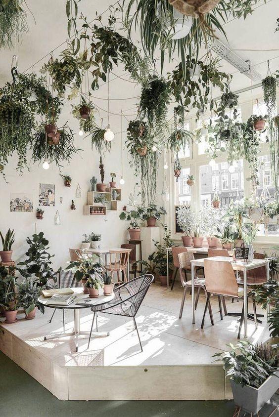 Indoor Garden Goals – Inspiration For All Plant Parents