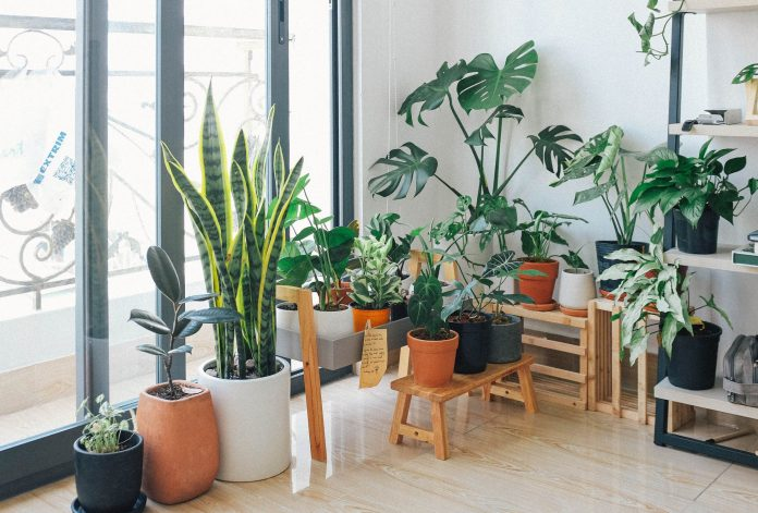 Plant Grow Lights - How To Choose The Right Ones