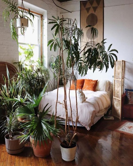 20 Ways To Style Air Purifying And Cool Looking Plants
