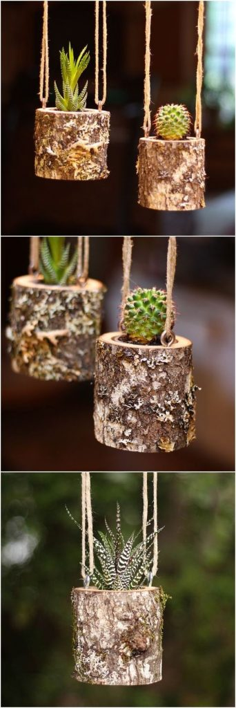 floating succulents