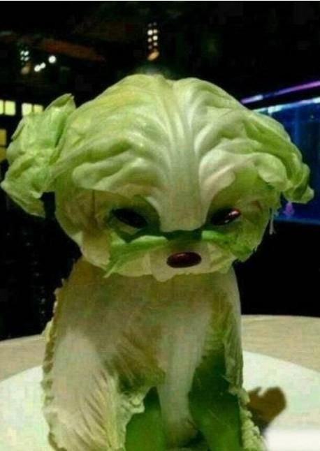getting creative with fruits and vegetables lettuce puppy momooze.com picturesque playground for moms