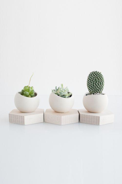minimalist succulents