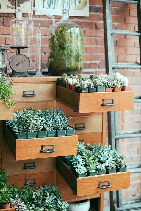 original succulent storage